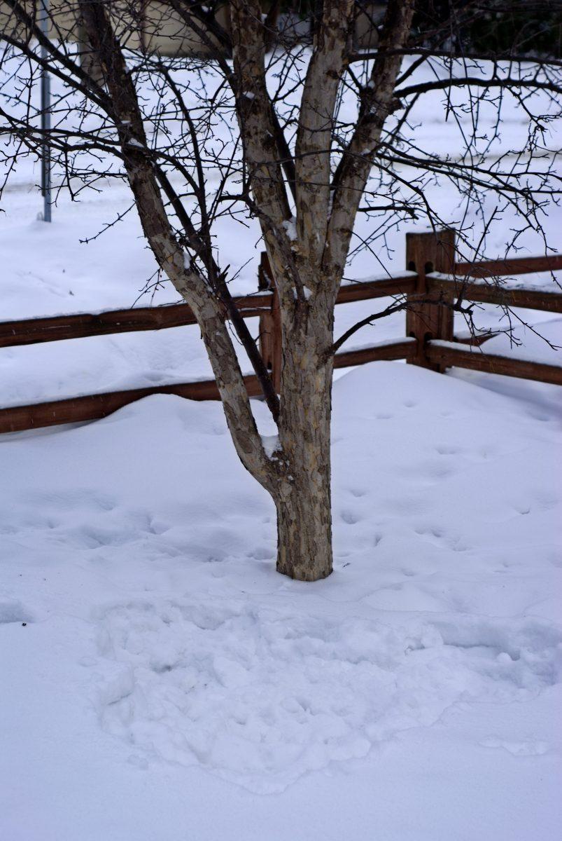 Whimsical Valentine's snow art in new fallen snow