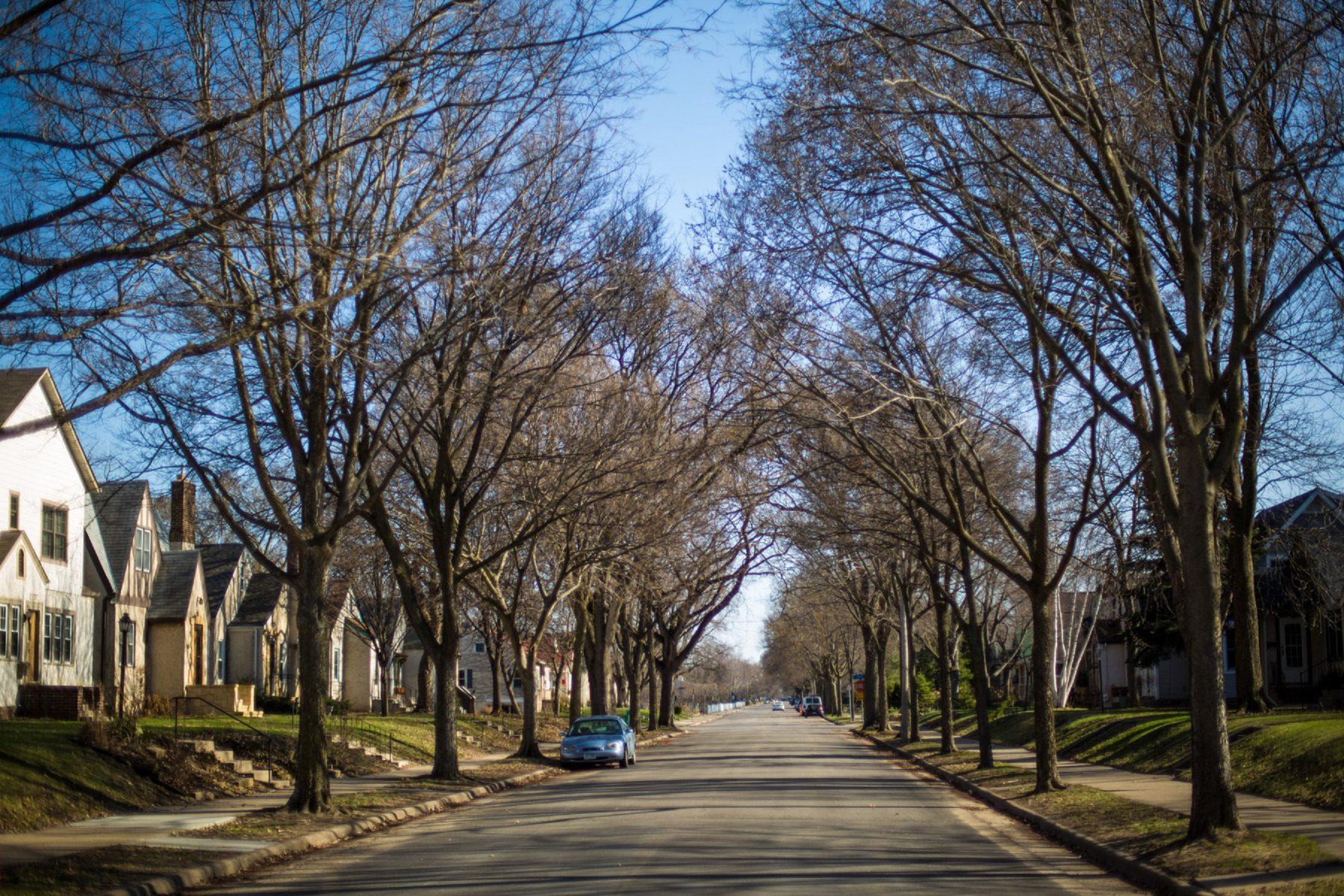 Boulevard Trees