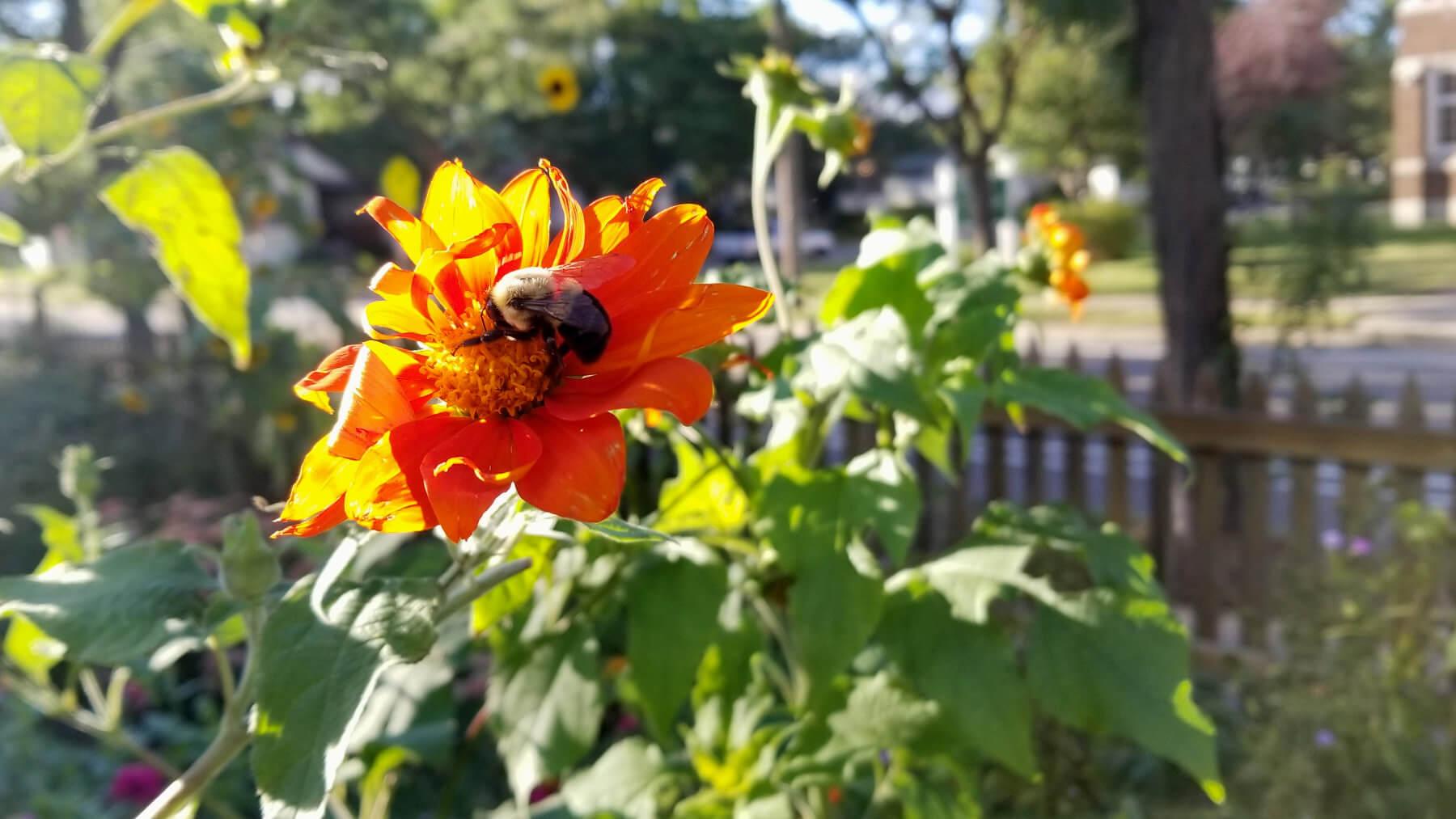 bee on a flower in a city garden