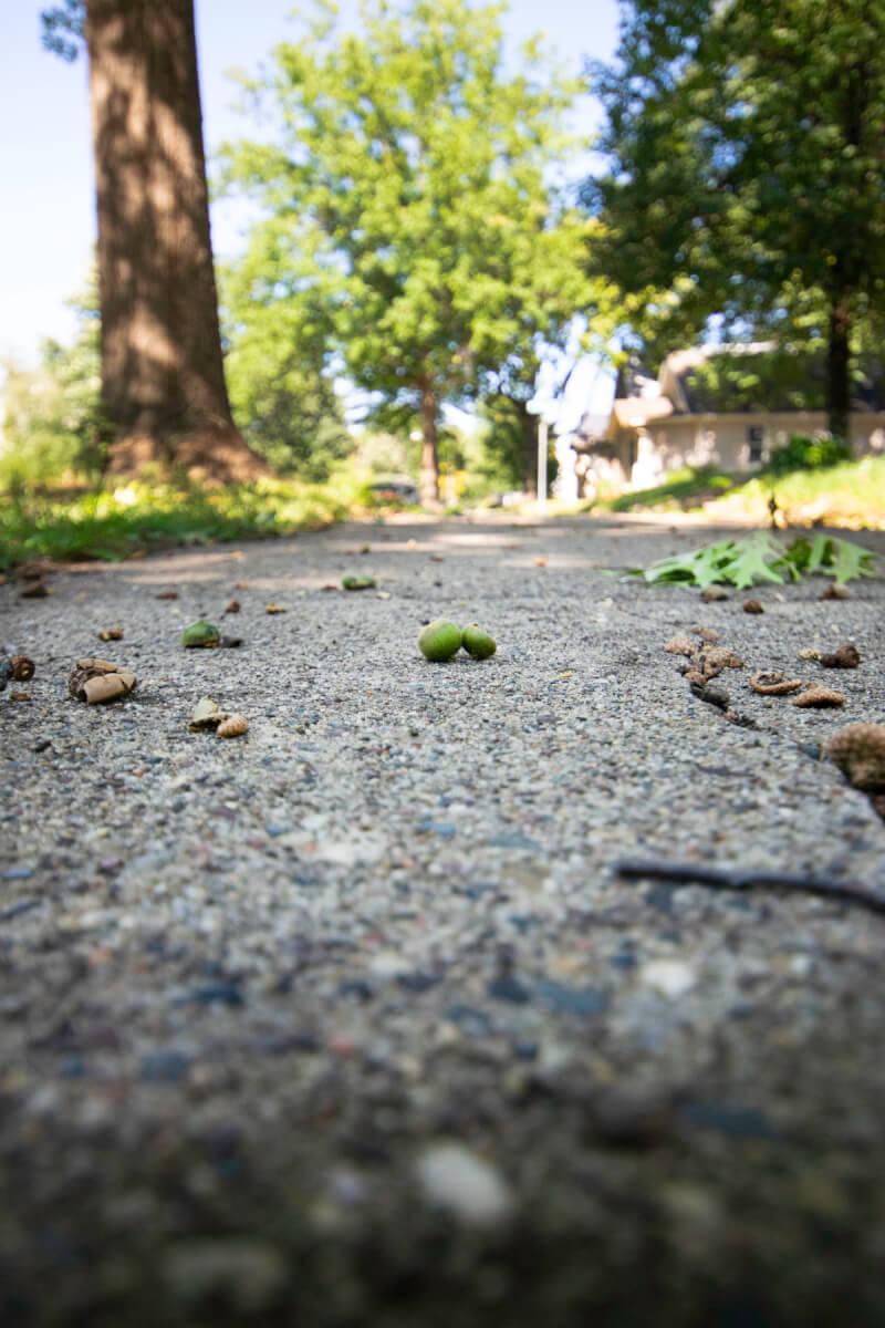 acorns on a sidewalk