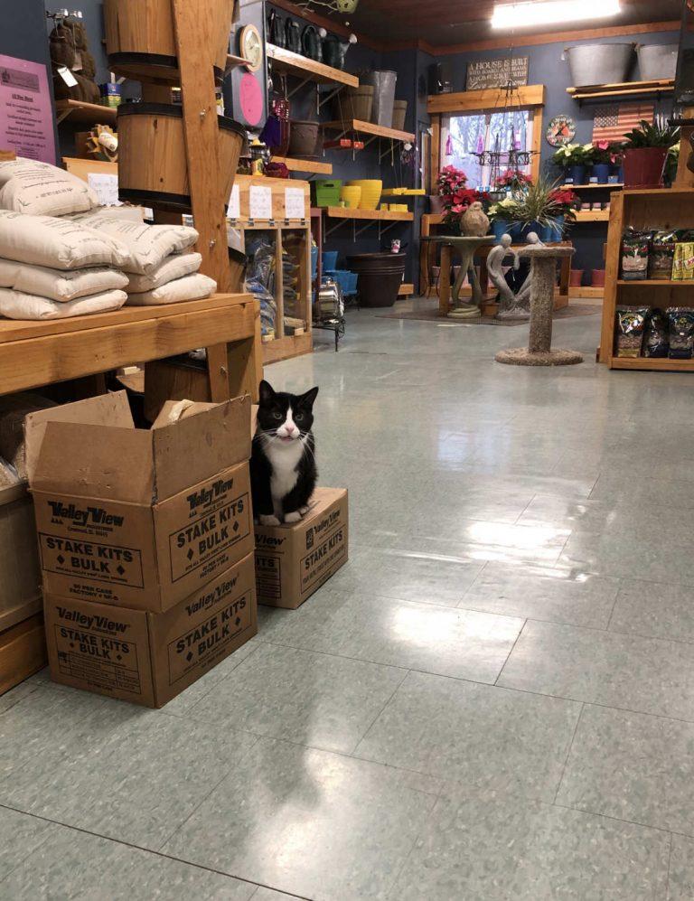 Tuxedo cat on box in retail shop