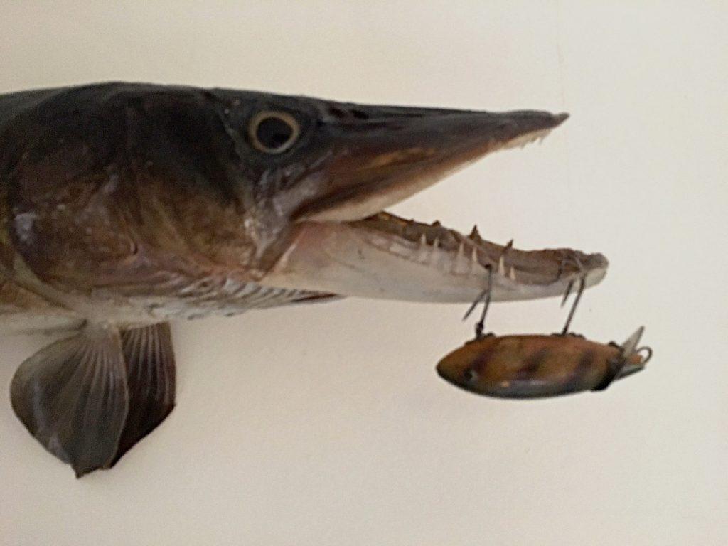 mounted fish head on wall