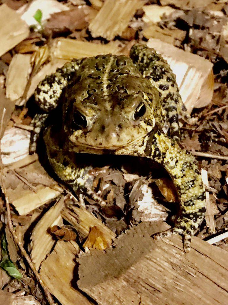 closeup of small frog looking up at camera