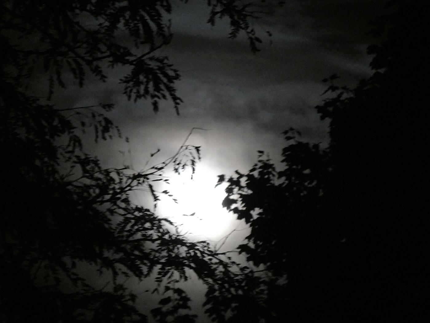 White globe shines through gray hazy clouds and tree limbs