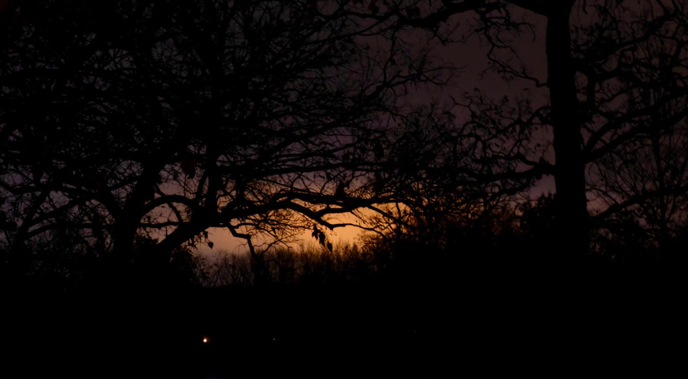 Orange glow on horizon in a black sky with tree silhouettes