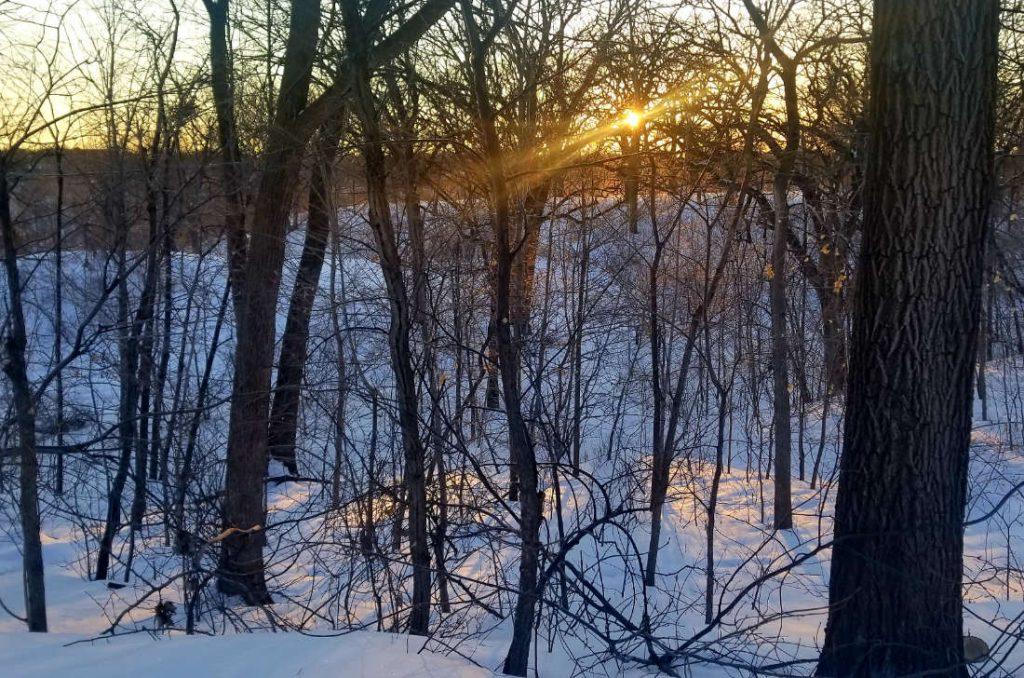 Sunrise through bare trees in a winter landscape